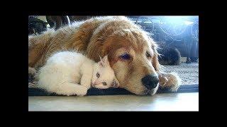 Собачки заботятся о  Котятах. Сборник. Симпатичное И Забавное Видео с Животными.