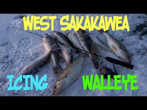Icing West Sakakawea Walleye