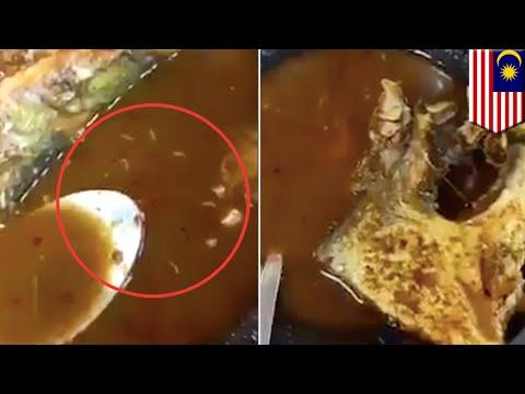 【異物混入】魚スープに生きたウジ虫 マレーシアのレストラン - トモニュース