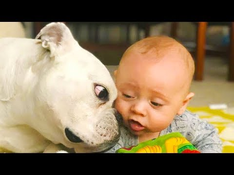 Dog loves Baby  Try Not To Laugh With Funniest Moment Baby and Dog