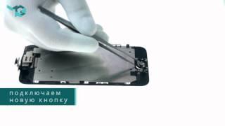 видео замена touch id на iphone 6
