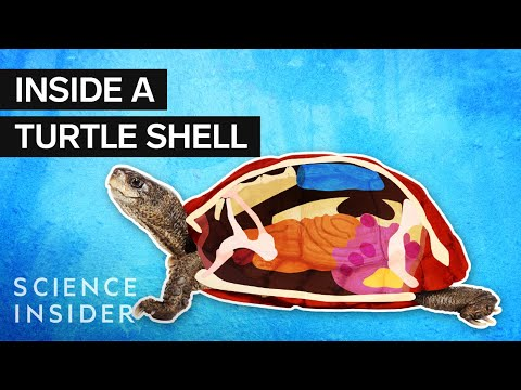 Maddox - What's Inside A Turtle Shell?