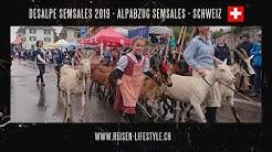 Dèsalpe Semsales - Alpabzug Semsaes 2019 - Schweiz - reisen-lifestyle.ch
