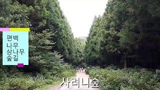 사려니숲 붉은오름 제주여행추천코스 JEJU Island…