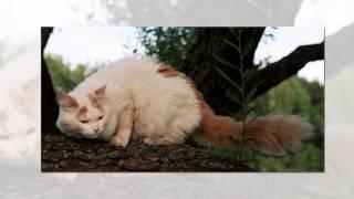 Самые большие кошки в мире   Most big cats #ЛучшеенаЮТУБе