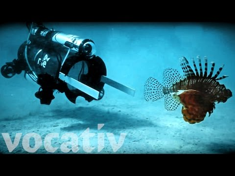 This Robot Hunts Invasive Lionfish