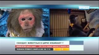 КП. Скандал: как избивают животных в цирке
