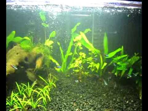 how to clean aquarium rocks of algae