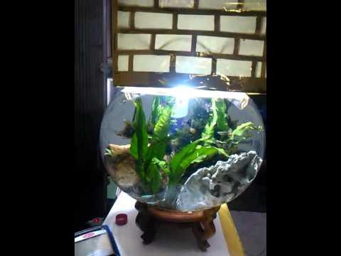 Aquascape Aquarium Bulat