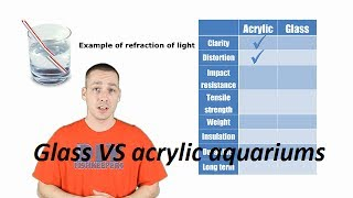 Glass Vs Acrylic Aquariums