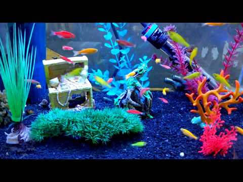 { 4K } Aquarium - Glo Fish, Glowing Fish, Danio Glo-fish - Kids love them.