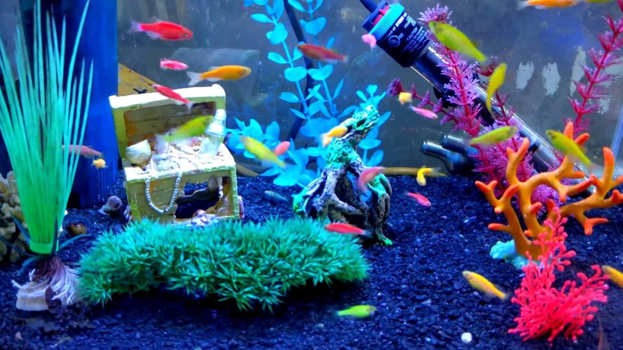 4k aquarium glo fish glowing fish danio glo fish kids love them youtube. Black Bedroom Furniture Sets. Home Design Ideas