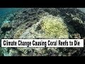 Climate Change Problems - Coral Reefs Dying, Rising Sea Levels, Warming Oceans, 90% Of Turtle Eggs