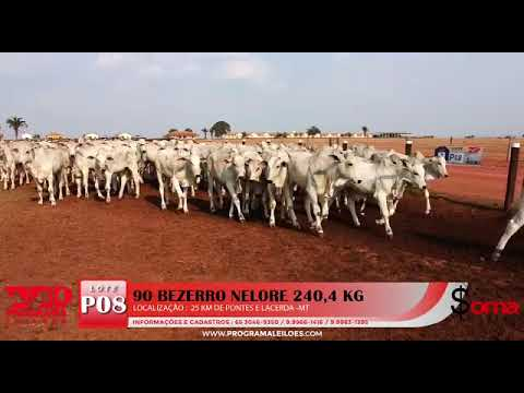 Lote P08