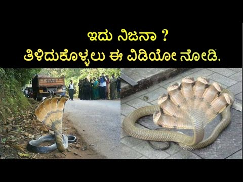 Seven headed snake found in Karnataka secret revealed in kannada language
