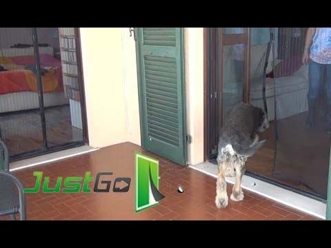 Zanzariere magnetiche facili per gli animali domestici - Porta per gatti ...