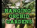 HOW TO BUILD A HANGING MOSSY ORCHID GARDEN/ HANGING ORCHID GARDEN TIPS 1080p