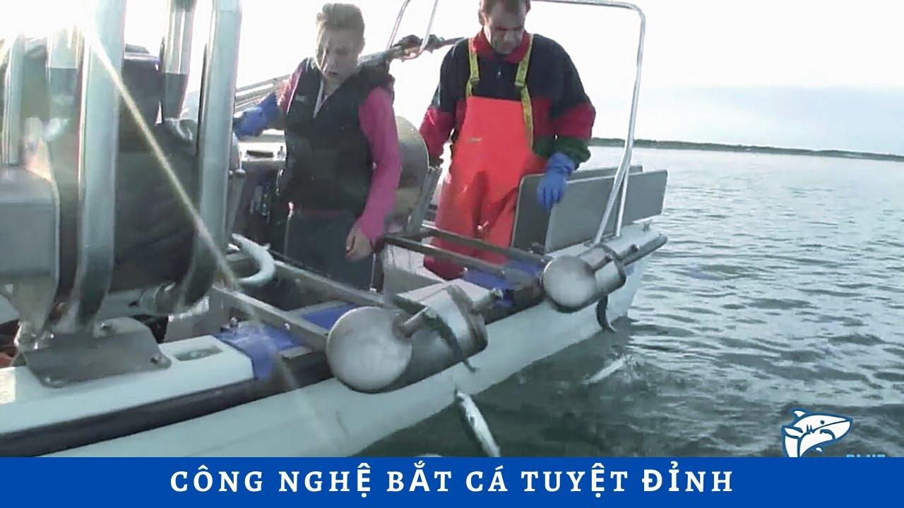 Công nghệ bắt cá tuyệt đỉnh, đẳng cấp trí tuệ của con người là đây