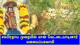 சம்பிரதாய முறையில் மான் வேட்டையாடினார் மலையப்பசுவாமி | Thirumalai | Thirupathi | Britain Tamil