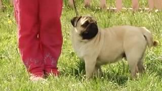 Племсмотр собак 2017. Запорожье, Украина