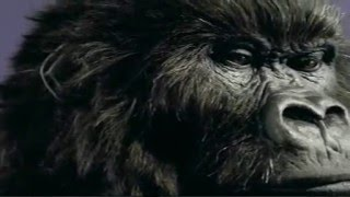 Cadbury Dairy Milk Gorilla Advert