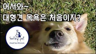 (심쿵주의) 강아지 머드 샴푸 '스마일리 펫(S…