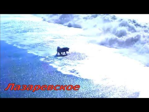 🔔На встречу волне\ Шарик- морской волк\ Сочи 2020 Лазаревское