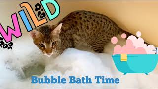 Funny Cat Loves Water Especially Bubble Baths