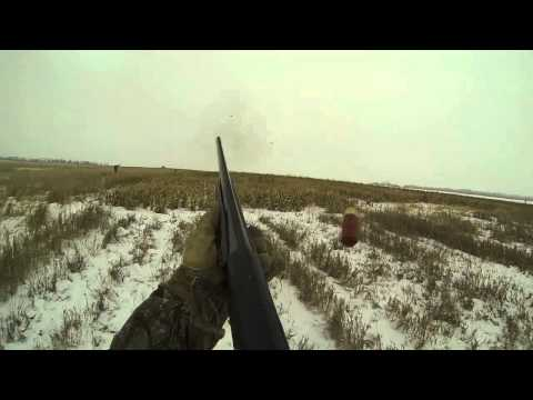 Pheasant Hunting 2013 Aberdeen, South Dakota