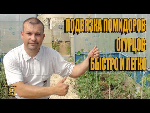 Как <b>подвязать</b> кусты помидоров в теплице и открытом грунте ...