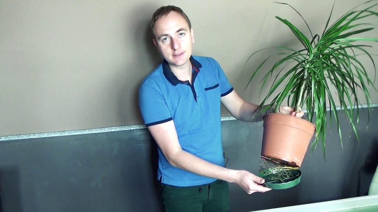 Plante D Intérieur Tendance plante d'intérieure/ explications, entretiens/ oh ! plante à la maison ! /  v1 sur 14/ tendance david