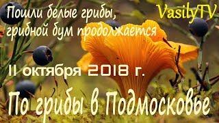 По грибы в Подмосковье 11 октября 2018 г. Пошли белые грибы, грибной бум продолжается