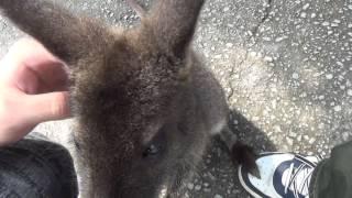 2014年に9月6日に姫路セントラルパークに行った時の動画です。 今度はワ...