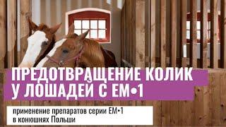 Решение проблем лошадей с помощью ЭМ (Польша)