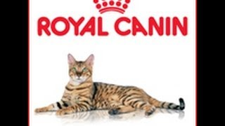 Сухой корм для кошек Роял Канин Лайт