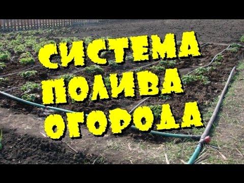 видео: Дачный ответ система полива огорода и сада сделай сам своими руками Дачные хитрости Дачные советы