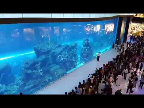 Dubai Aquarium in Dubai Mall: the Biggest & Largest Underwater Zoo in Middle East