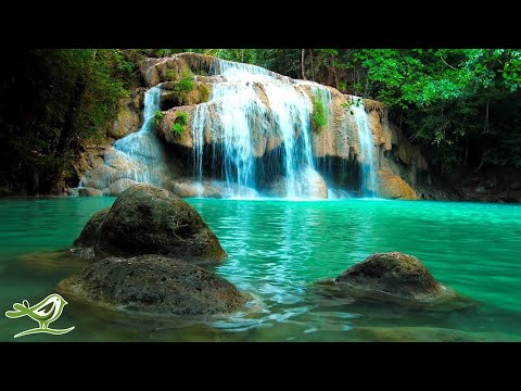 Relaxing Zen Music with Water Sounds • Peaceful Ambience for Spa, Yoga and Relaxation