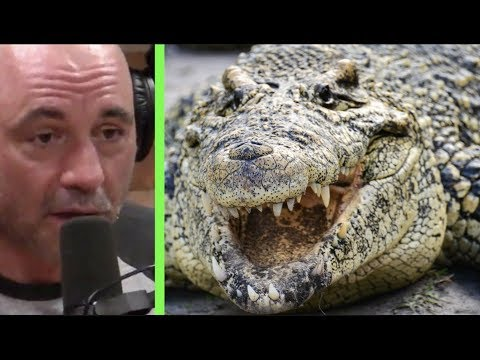 Joe Rogan - The Everglades are a Redneck Jurassic Park