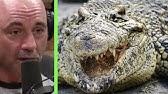 Joe Rogan - The Everglades are a Redneck Jurassic Park