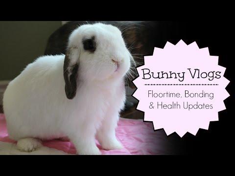 BudgetBunny: Bunny Vlogs | Floortime, Bonding & Health Updates