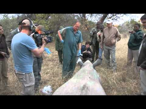Rhino Revolution - South Africa Travel Channel 24