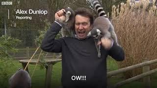 Репортёра «атаковали» лемуры во время съёмок зоопарке. Звери