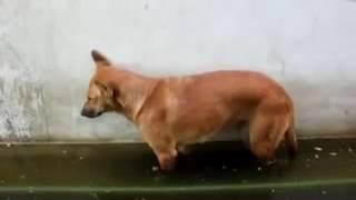 @Вот прикол! Собака уснула и упала в лужу. Смешно до слез!!!@