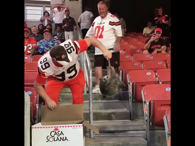 1793d1e1a86 Video  Cleveland Browns Fan Catches Live Possum During a Game