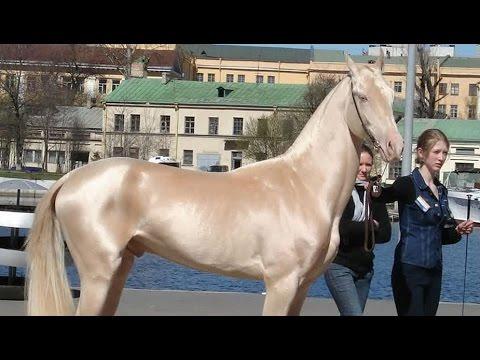 تعرف علي اجمل الخيول في العالم
