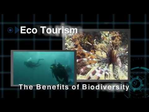 Official video of the International Year of Biodiversity 2010