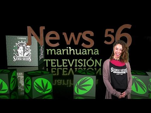 CATA BHO PROFESIONAL, CANNALIVIO Marihuana Medicinal COLOMBIA en NEWS 56