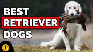 TOP 10 RETRIEVER DOG BREEDS
