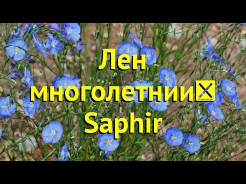 Лен многолетний. Краткий обзор, описание характеристик, где купить рассада linum lewisii Saphir